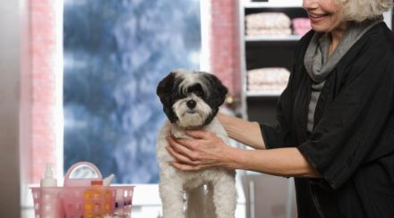 Easily Groom your Dog's Ears, with these 6 Simple Steps