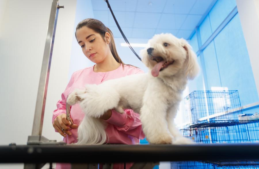 What does it Cost to Groom Your Dog? We Checked for You (US, Aus, and GB) 2