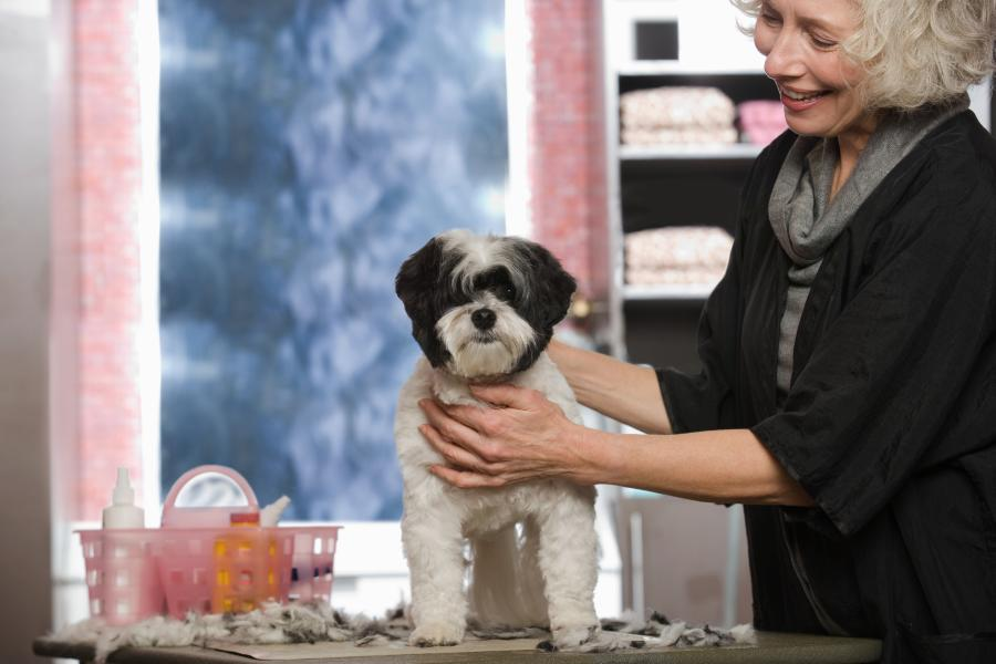 What does it Cost to Groom Your Dog? We Checked for You (US, Aus, and GB) 6
