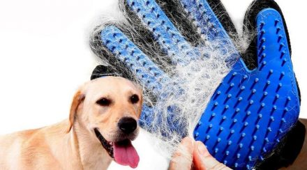 What to Consider When Choosing Dog Grooming Gloves