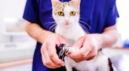 How To Groom Your Cat, The Ultimate Guide