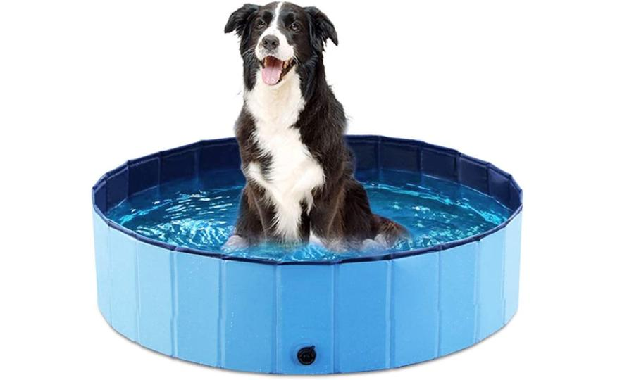 Things To Consider When Choosing A Dog Grooming Bathtub 10