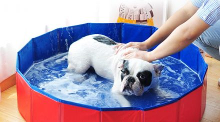 Things To Consider When Choosing A Dog Grooming Bathtub
