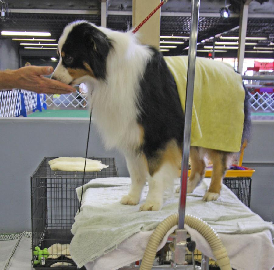 What to Consider When Choosing a Dog Grooming Table 2