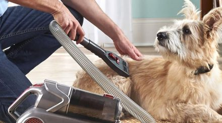 What to Consider When Choosing a Dog Grooming Vacuum