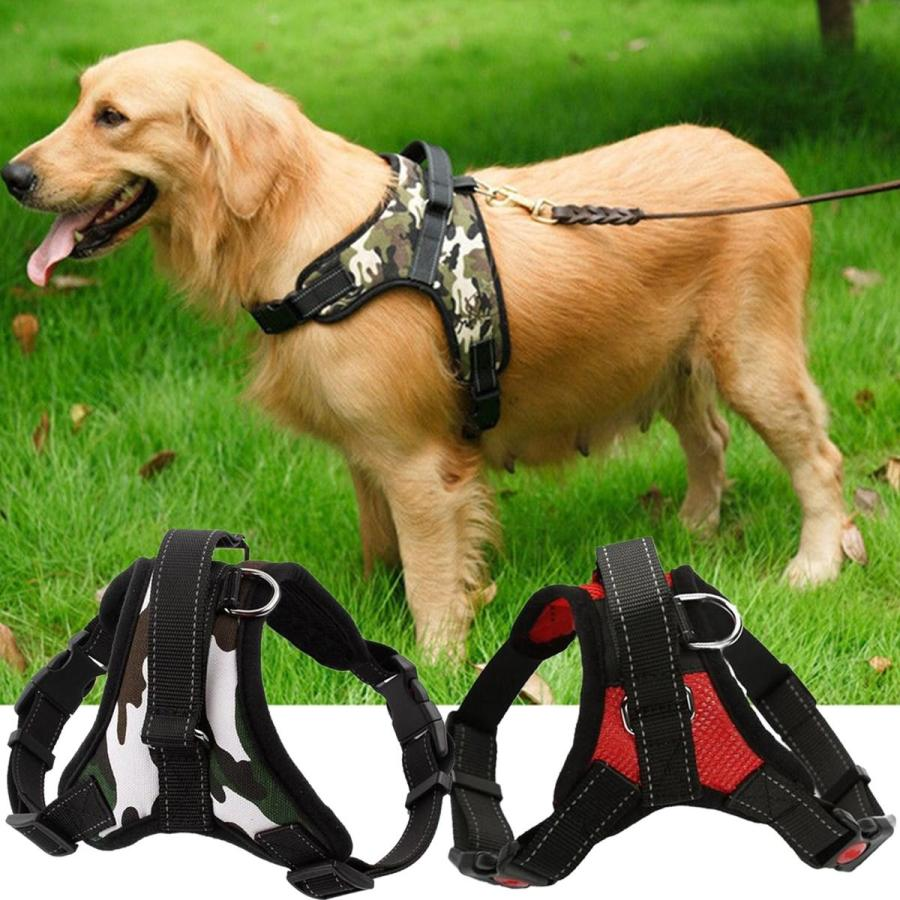 What to Consider When Choosing A Dog Harness 1